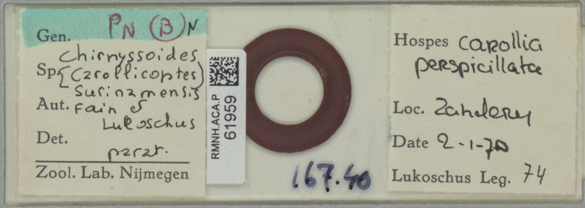 RMNH.ACA.P.61959   Chirnyssoides (Carollicoptes) surinamensis Fain & Lukoschus