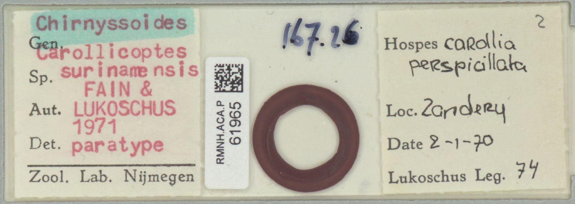 RMNH.ACA.P.61965 | Chirnyssoides (Carrolicoptes) surinamensis Fain & Lukoschus 1971