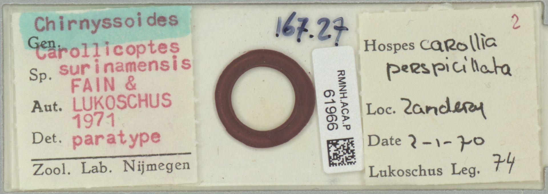 RMNH.ACA.P.61966 | Chirnyssoides carollicoptes surinamensis Fain & Lukoschus 1971