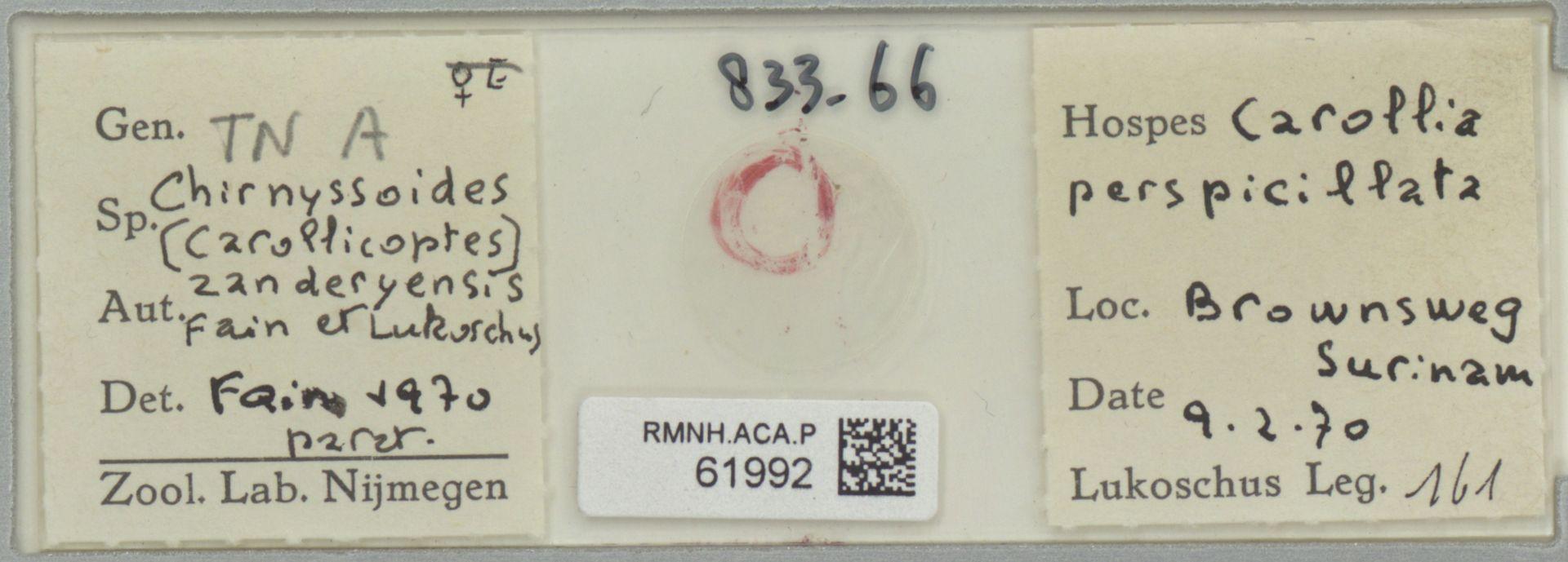 RMNH.ACA.P.61992   Chirnyssoides (Carrolicoptes) zanderyensis Fain et Lukoschus