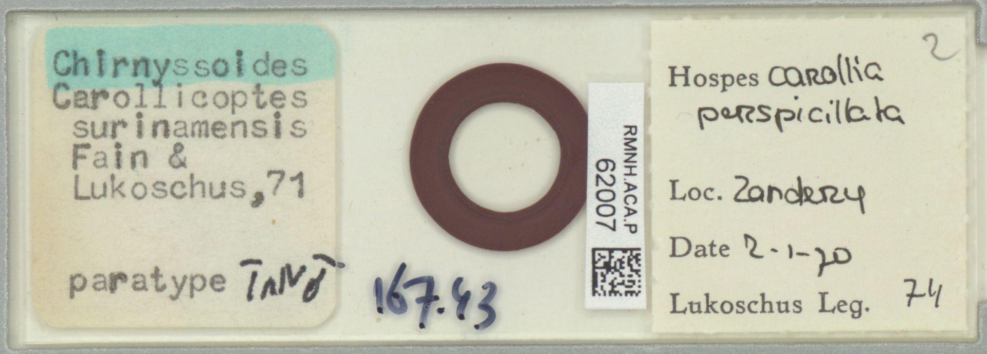 RMNH.ACA.P.62007 | Chirnyssoides (Carrolicoptes) surinamensis Fain & Lukoschus, 71