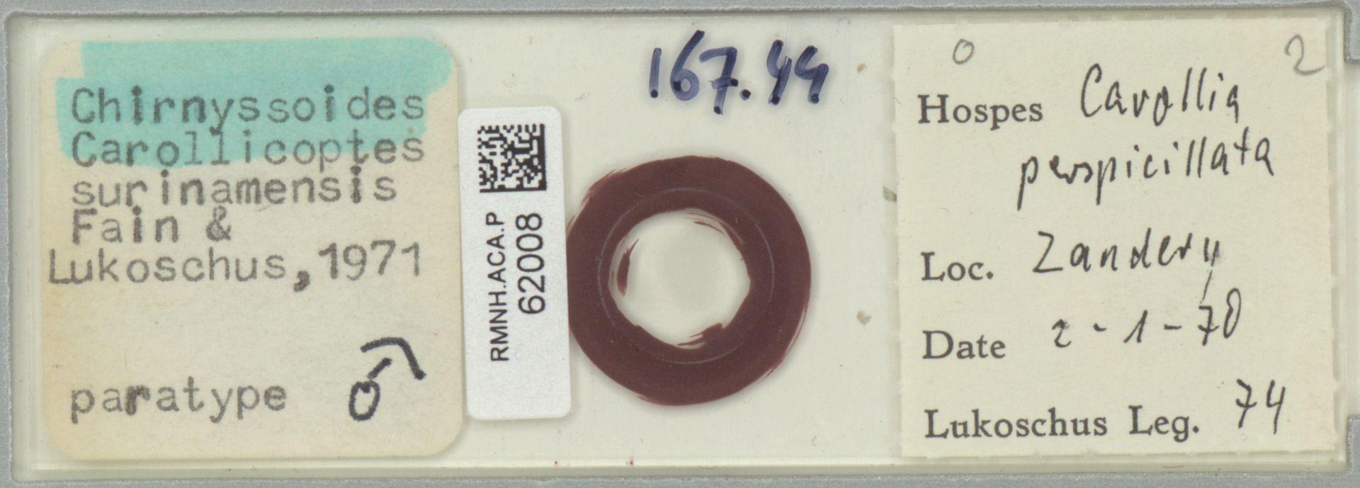 RMNH.ACA.P.62008 | Chirnyssoides (Carrolicoptes) surinamensis Fain & Lukoschus, 1971