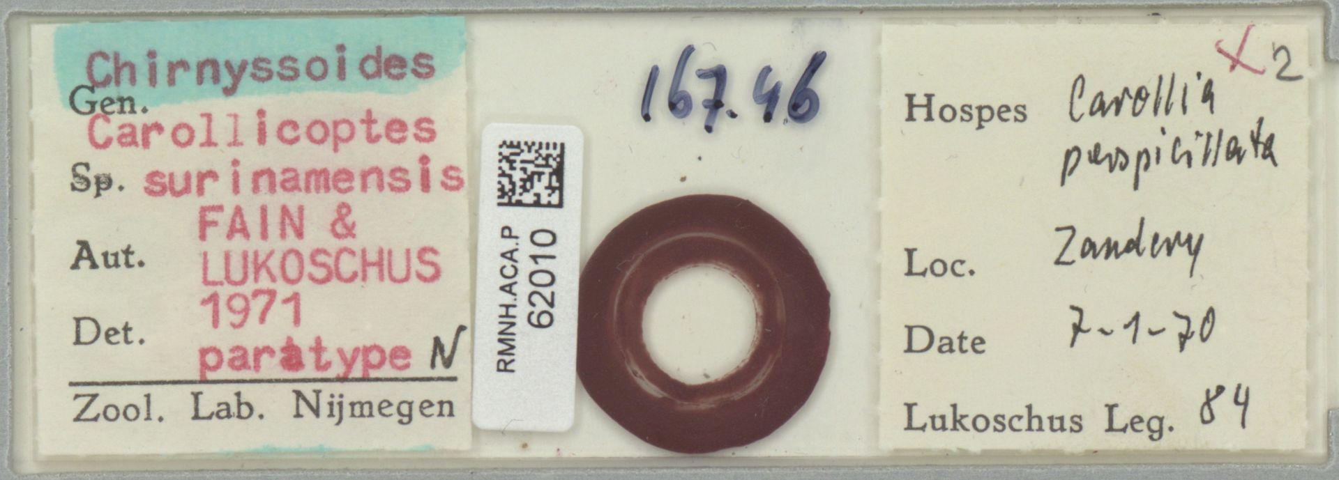 RMNH.ACA.P.62010 | Chirnyssoides carollicoptes surinamensis Fain & Lukoschus 1971