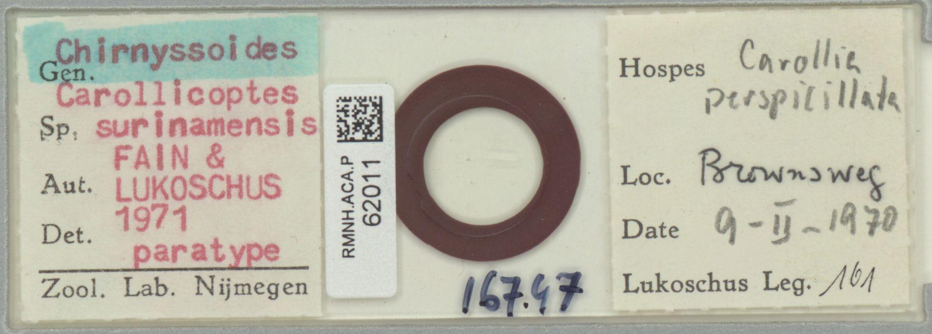 RMNH.ACA.P.62011   Chirnyssoides (Carrolicoptes) surinamensis Fain & Lukoschus 1971
