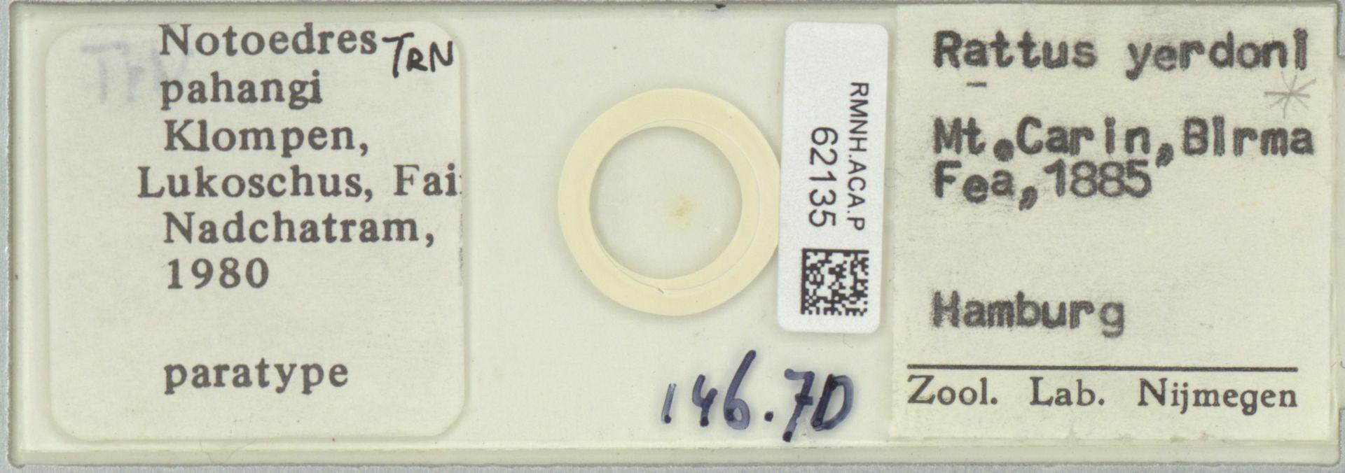 RMNH.ACA.P.62135 | Notoedres pahangi Klompen, Lukoschus, Fain & Nadchatram, 1980