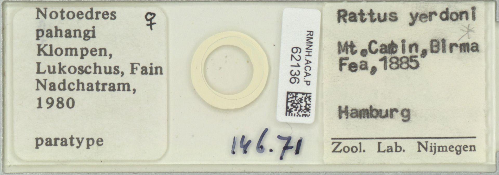 RMNH.ACA.P.62136 | Notoedres pahangi Klompen, Lukoschus, Fain & Nadchatram, 1980