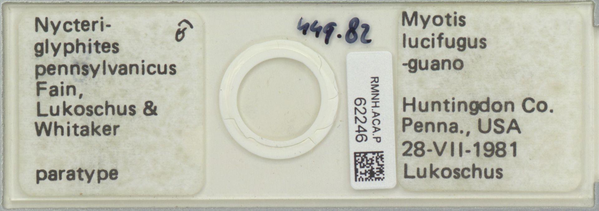RMNH.ACA.P.62246 | Nycteriglyphites pennsylvanicus Fain, Lukoschus & Whitaker