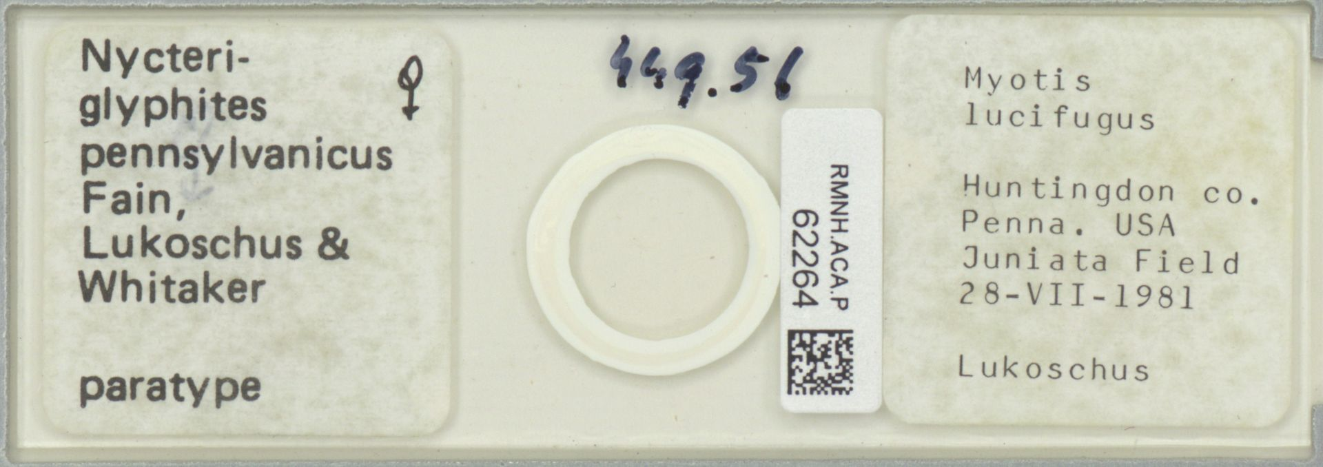 RMNH.ACA.P.62264 | Nycteriglyphites pennsylvanicus Fain, Lukoschus & Whitaker
