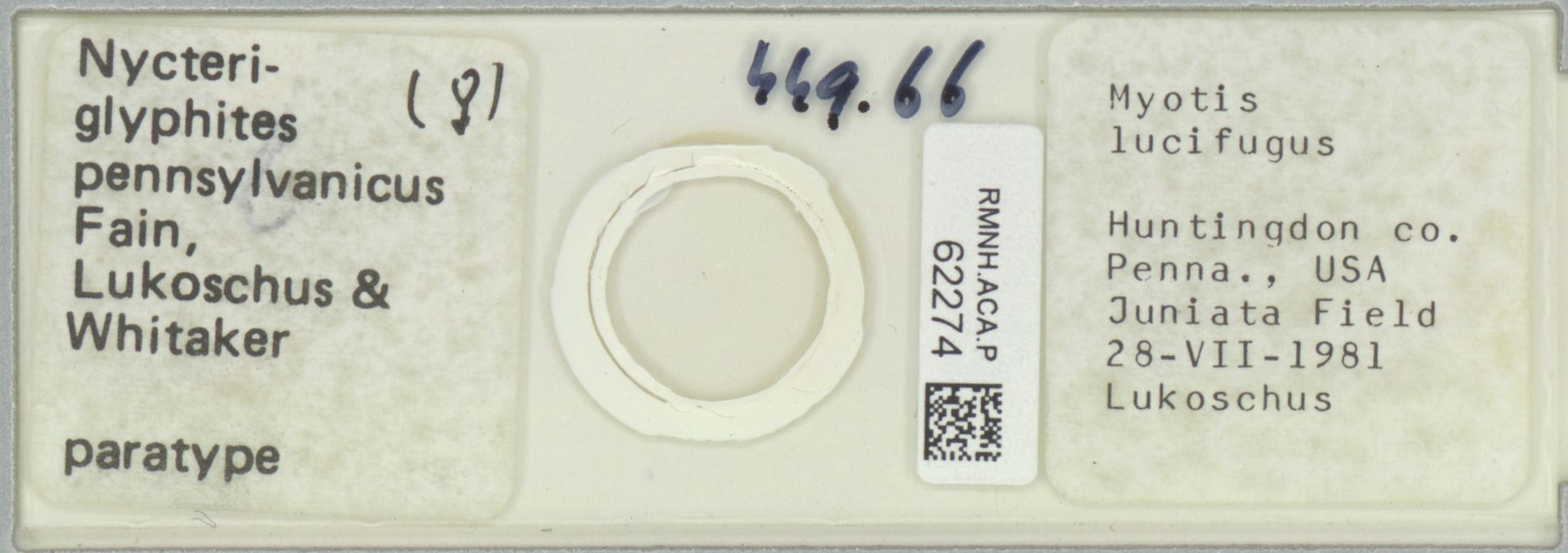 RMNH.ACA.P.62274 | Nycteriglyphites pennsylvanicus Fain, Lukoschus & Whitaker