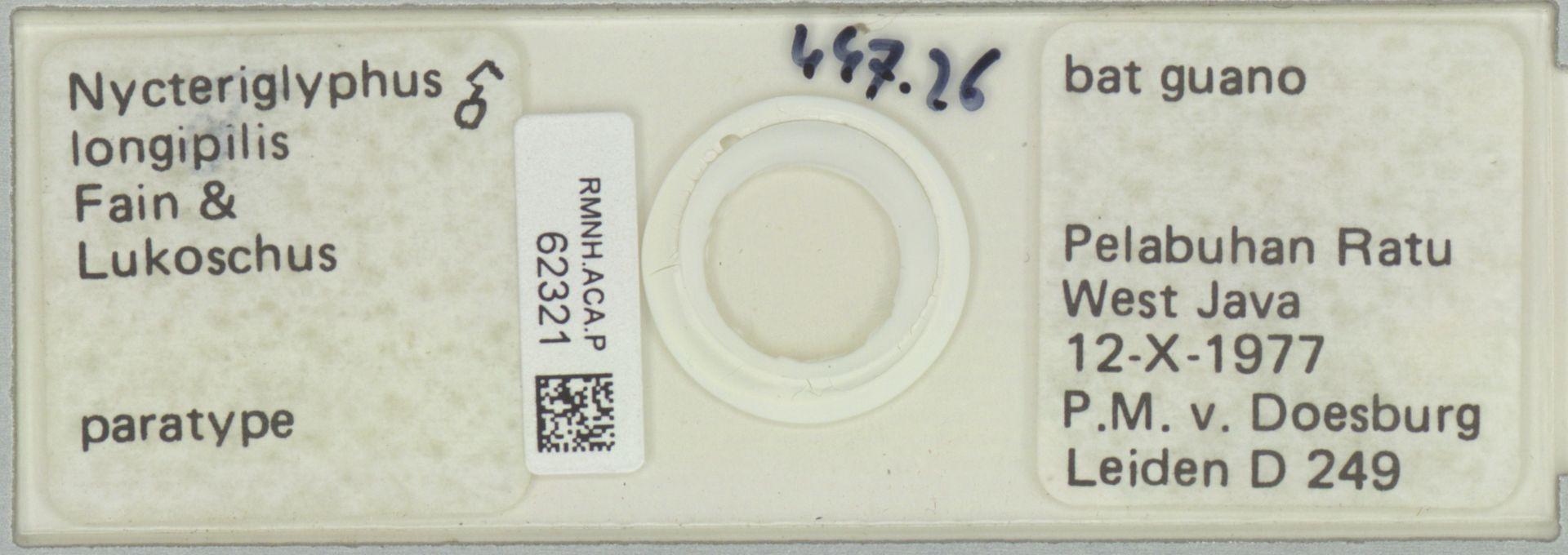 RMNH.ACA.P.62321 | Nycteriglyphus longipilis Fain & Lukoschus