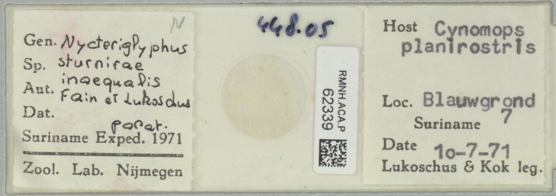 RMNH.ACA.P.62339 | Nycteriglyphites sturnirae inaequalis Fain et Lukoschus