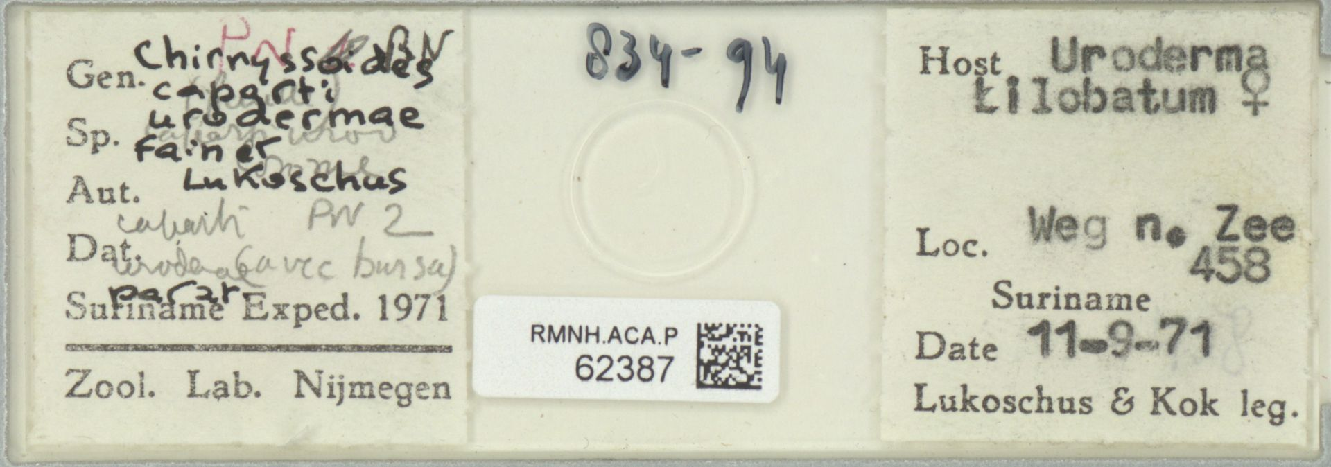 RMNH.ACA.P.62387 | Chirnyssoides caparti urodermae Fain & Lukoschus