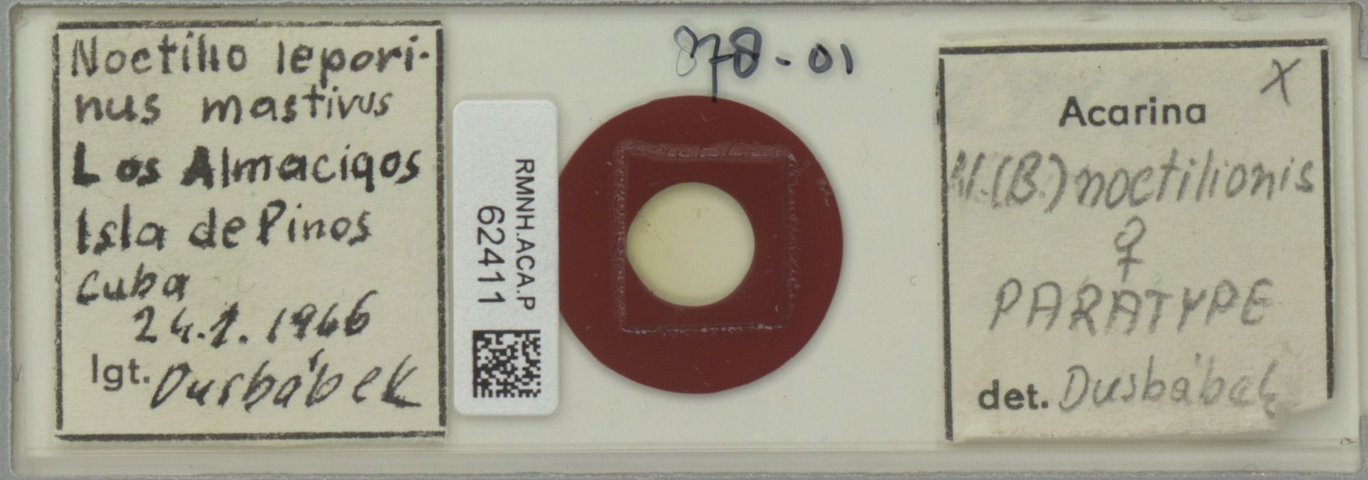 RMNH.ACA.P.62411 | Acarina