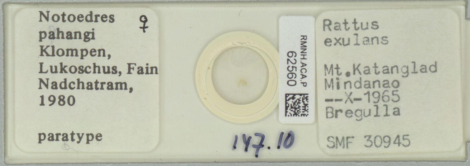 RMNH.ACA.P.62560 | Notoedres pahangi Klompen, Lukoschus, Fain Nadchatram, 1980