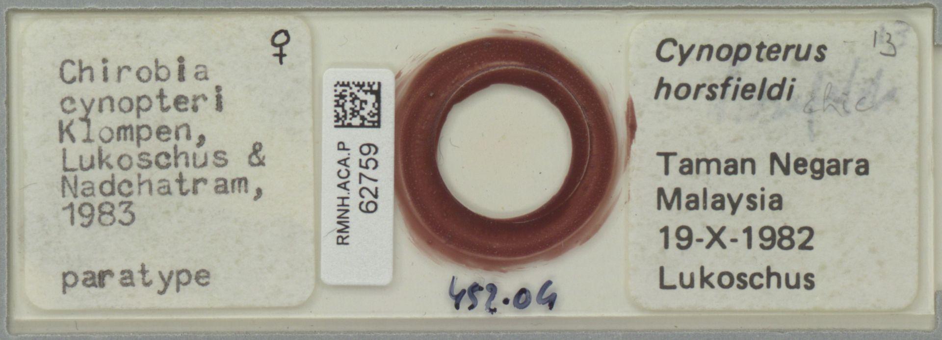 RMNH.ACA.P.62759 | Chirobia cynopteri Klompen, Lukoschus & Nadchatram, 1983