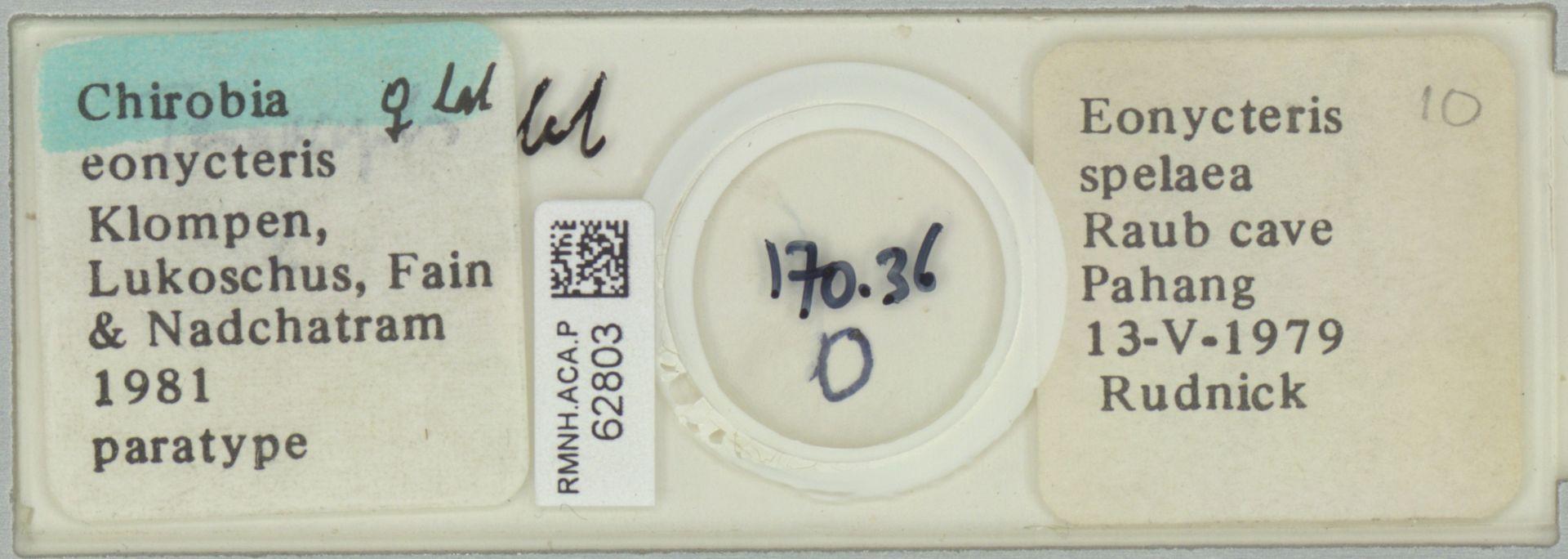 RMNH.ACA.P.62803   Chirobia eonycteris Klompen, Lukoschus, Fain & Nadchatram, 1981
