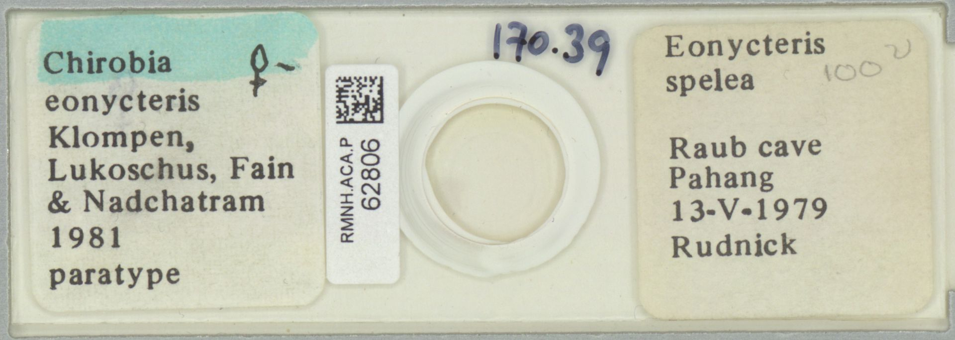 RMNH.ACA.P.62806 | Chirobia eonycteris Klompen, Lukoschus, Fain & Nadchatram, 1981