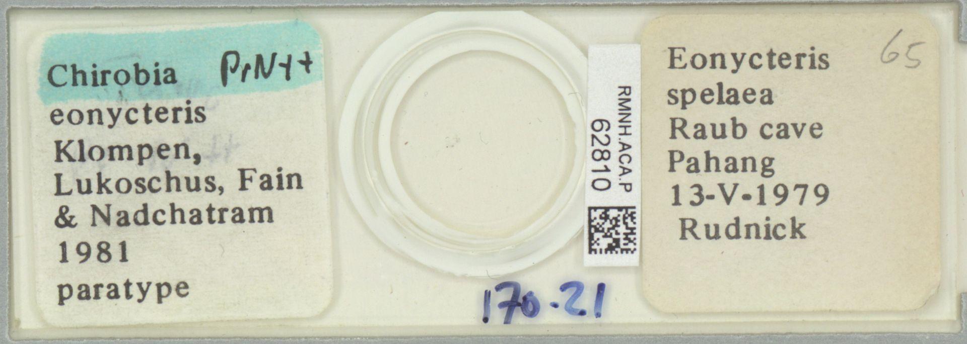 RMNH.ACA.P.62810 | Chirobia eonycteris Klompen, Lukoschus, Fain & Nadchatram 1981