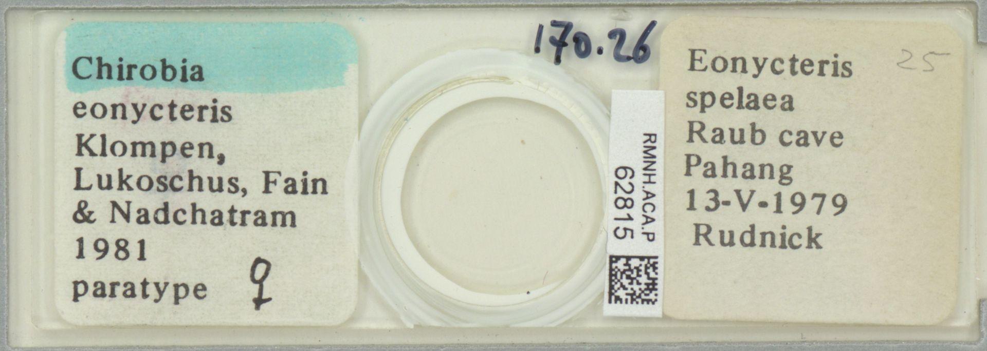 RMNH.ACA.P.62815   Chirobia eonycteris Klompen, Lukoschus, Fain & Nadchatram, 1981