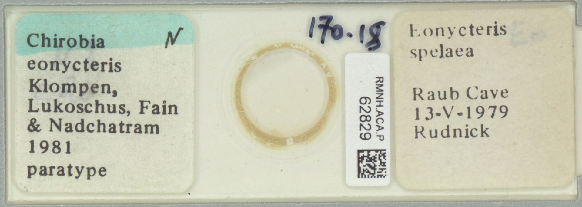 RMNH.ACA.P.62829 | Chirobia eonycteris Klompen, Lukoschus, Fain & Nadchatram 1981
