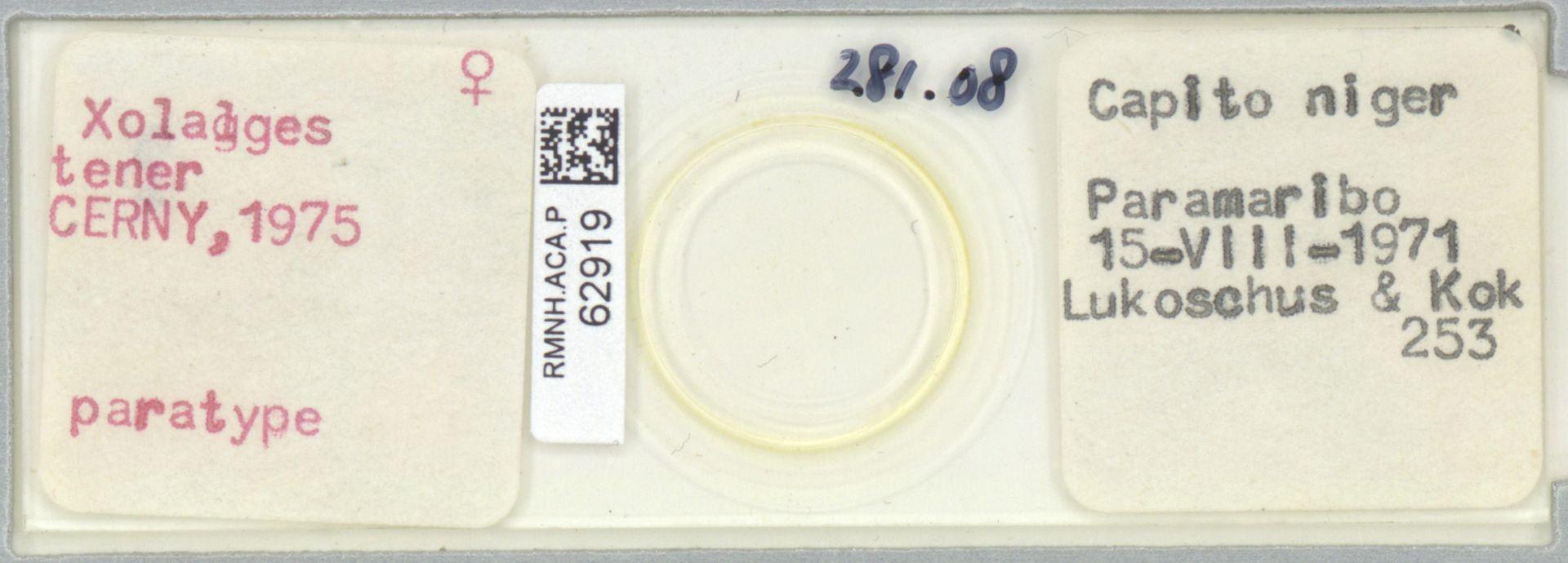 RMNH.ACA.P.62919   Xolalges tener Cerny, 1975
