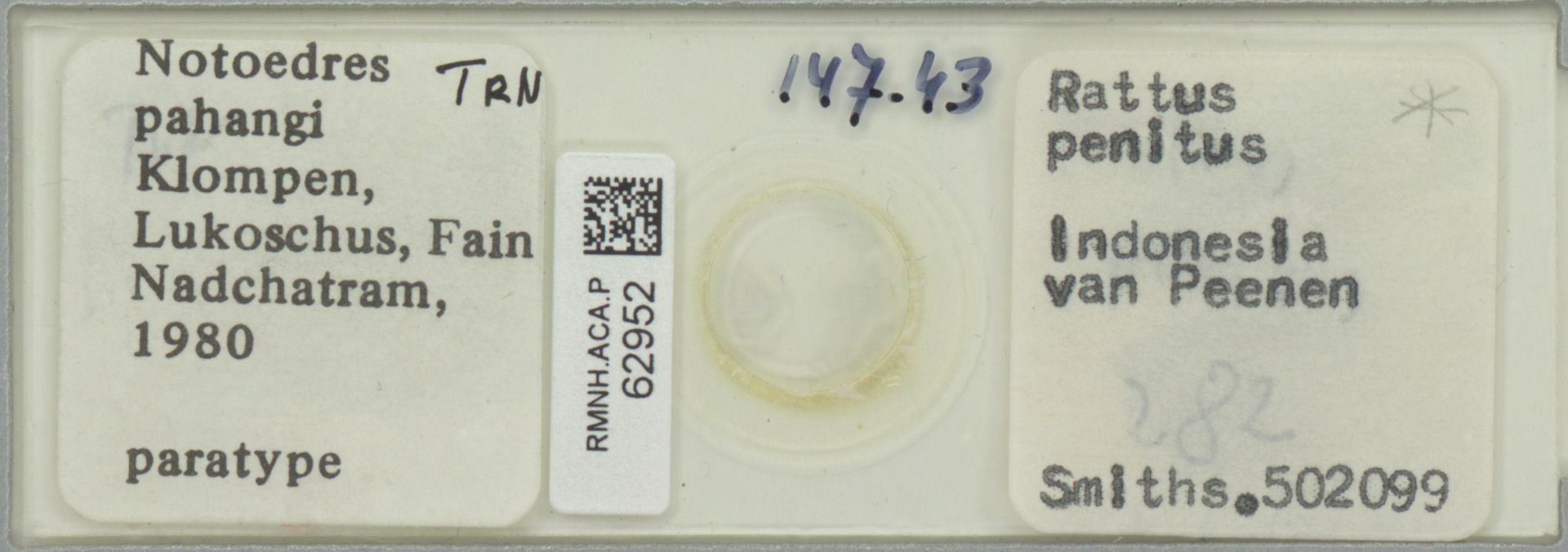 RMNH.ACA.P.62952 | Notoedres pahangi Klompen, Lukoschus, Fain Nadchatram, 1980