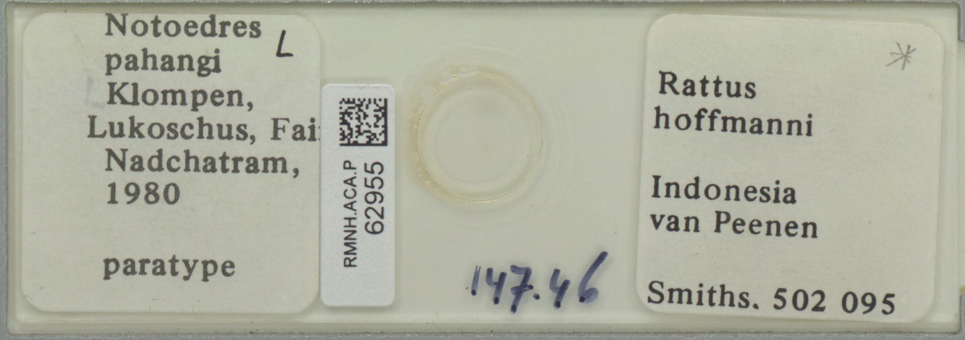 RMNH.ACA.P.62955   Notoedres pahangi Klompen, Lukoschus, Fain & Nadchatram, 1980