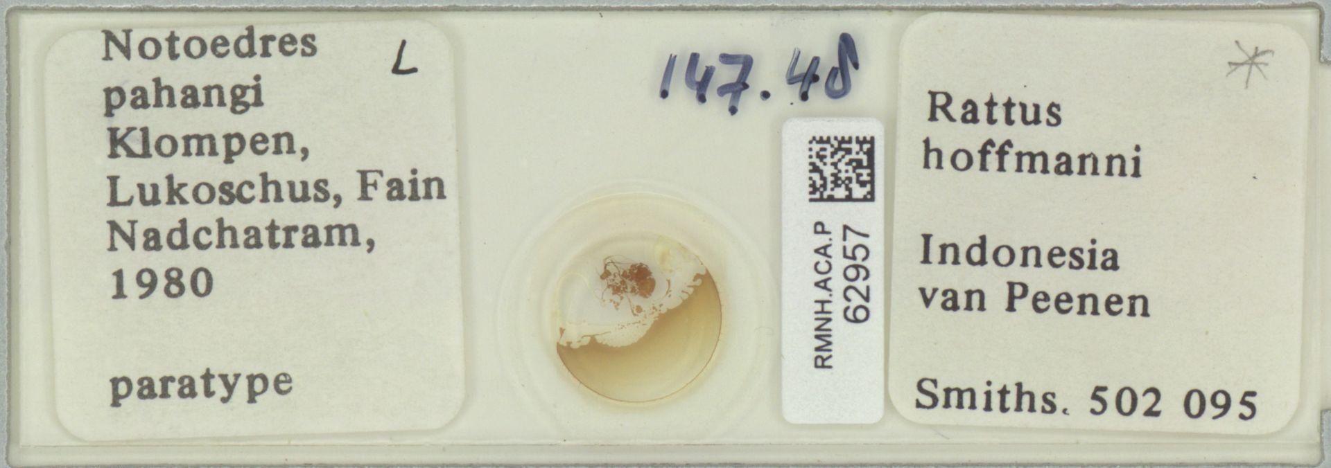 RMNH.ACA.P.62957   Notoedres pahangi Klompen, Lukoschus, Fain, Nadchatram 1980