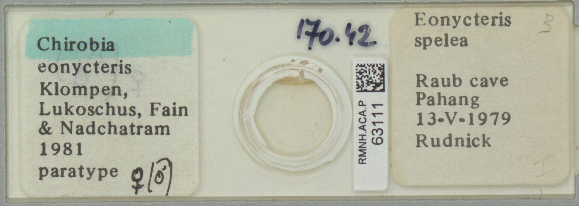 RMNH.ACA.P.63111 | Chirobia eonycteris Klompen, Lukoschus, Fain & Nadchatram 1981