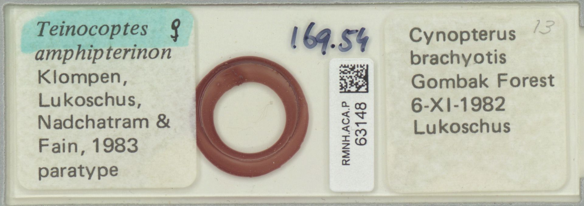RMNH.ACA.P.63148 | Teinocoptes amphipterinon Klompen, Lukoschus, Nadchatram & Fain, 1983