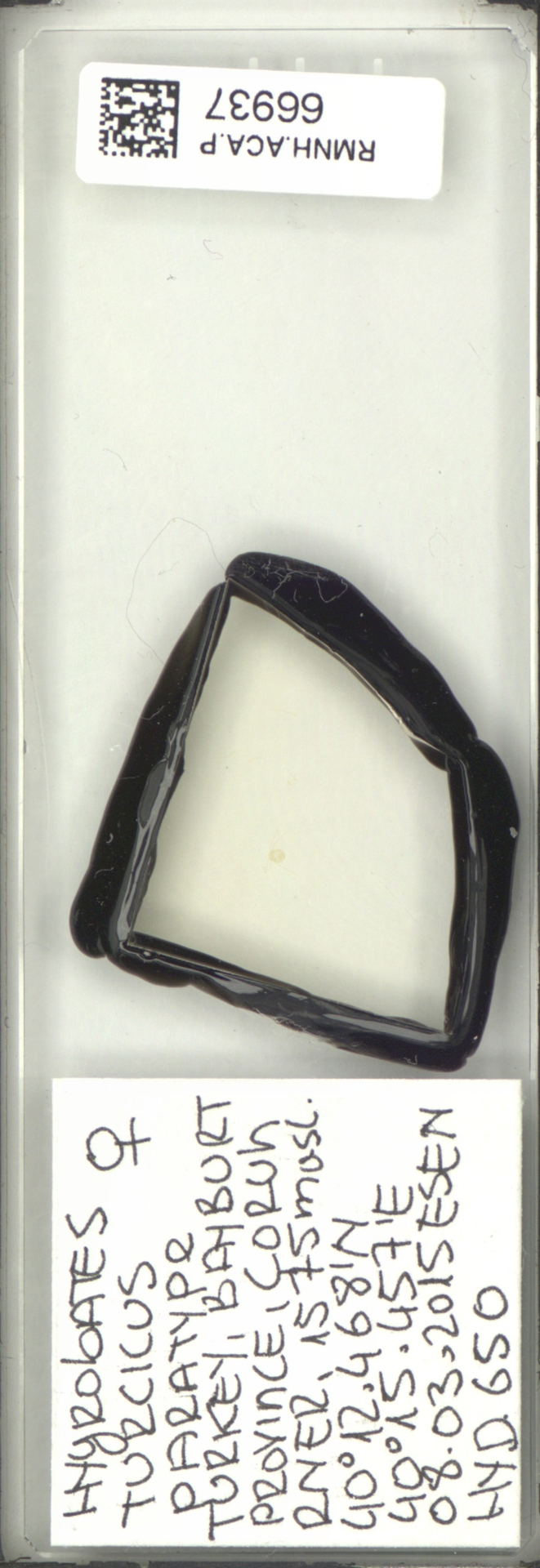 RMNH.ACA.P.66937 | Hygrobates turcicus Pesic, Esen & Dabert 2017