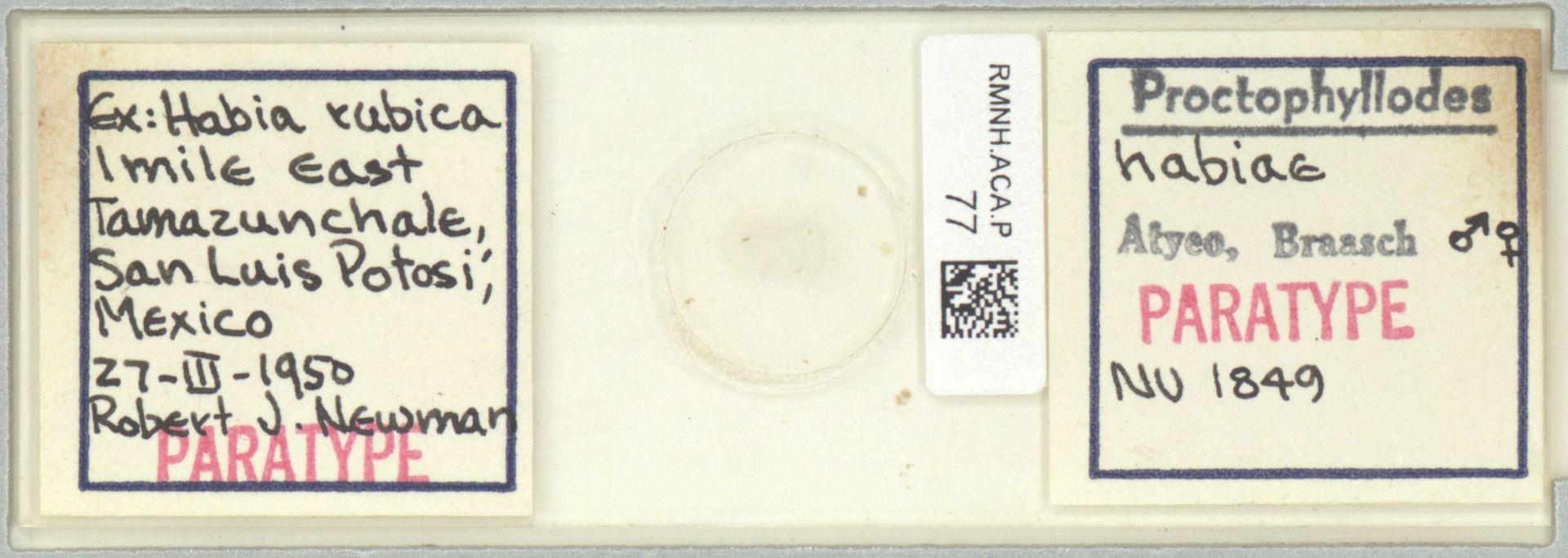 RMNH.ACA.P.77 | Proctophyllodes habiae Atyeo, Braash