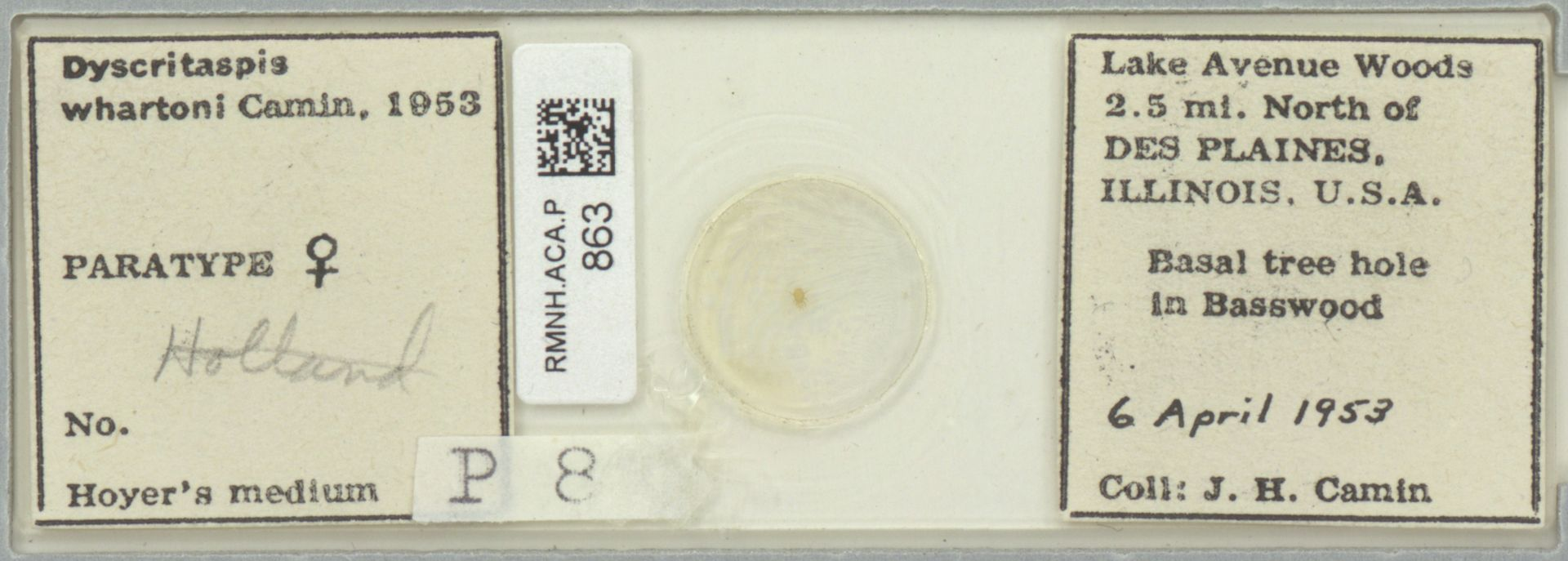 RMNH.ACA.P.863   Dyscritaspis whartoni Camin, 1953