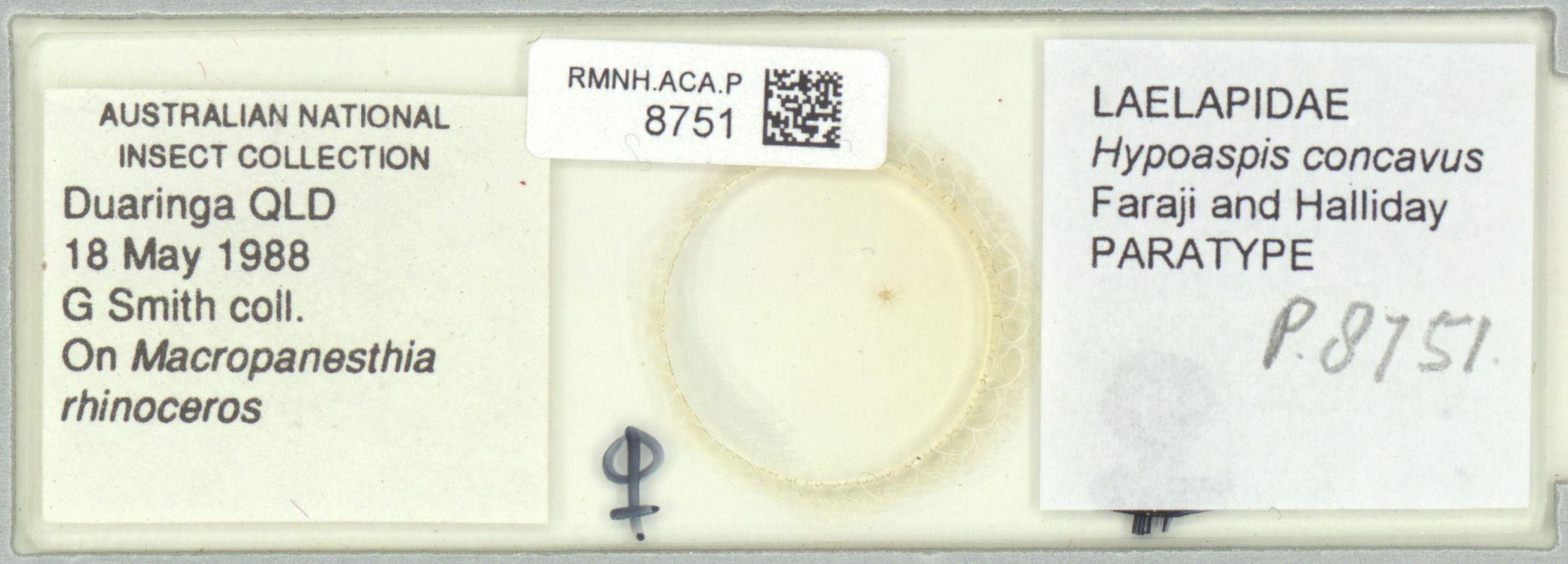 RMNH.ACA.P.8751 | Hypoaspis concavus Faraji and Halliday