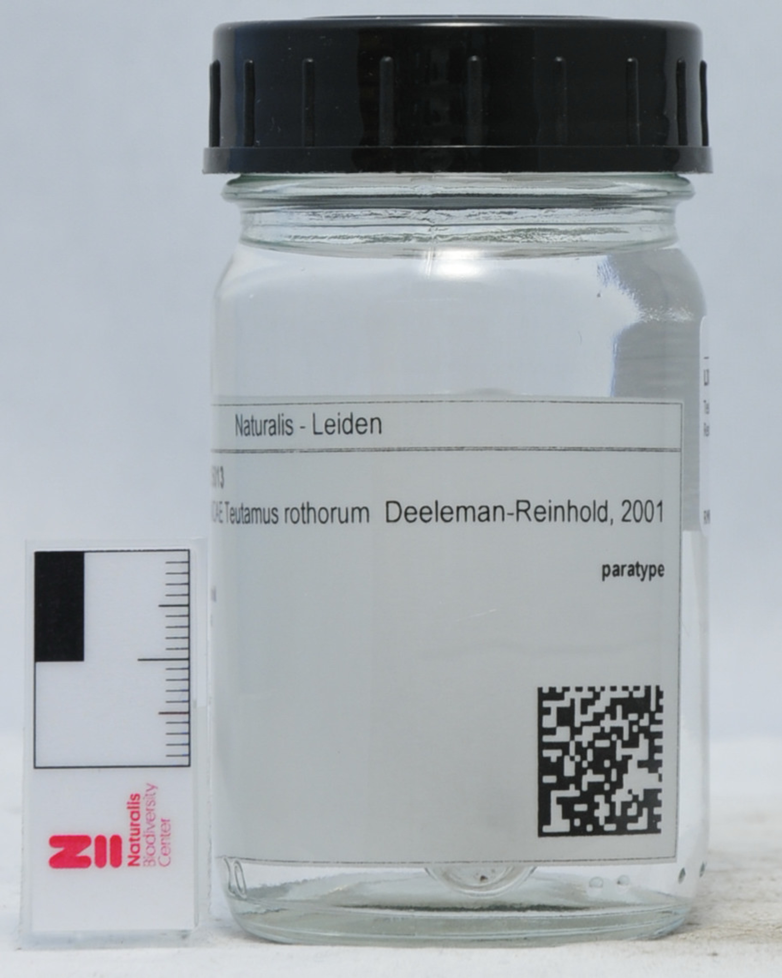 RMNH.ARA.15013   Teutamus rothorum Deeleman-Reinhold, 2001