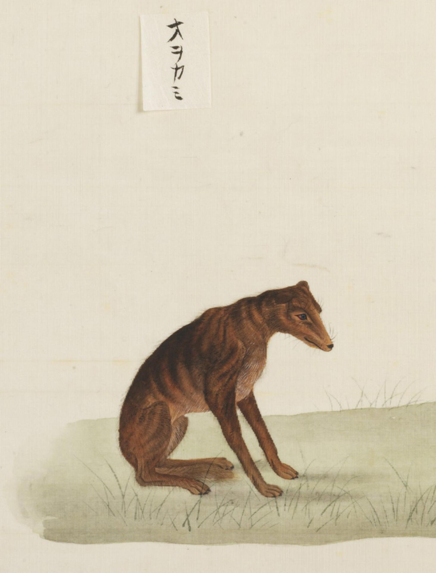 RMNH.ART.103 | Canis lupus hodophillax