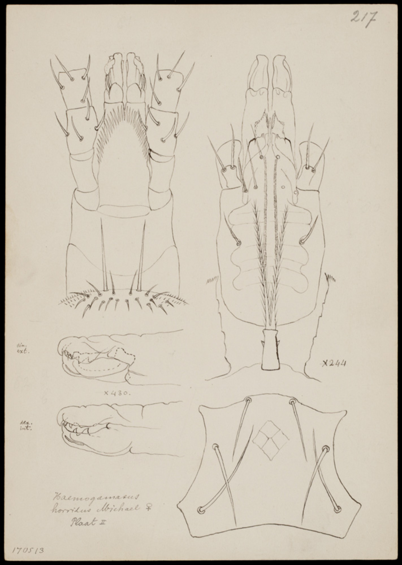 RMNH.ART.1063   Haemogamasus horridus (Michael)