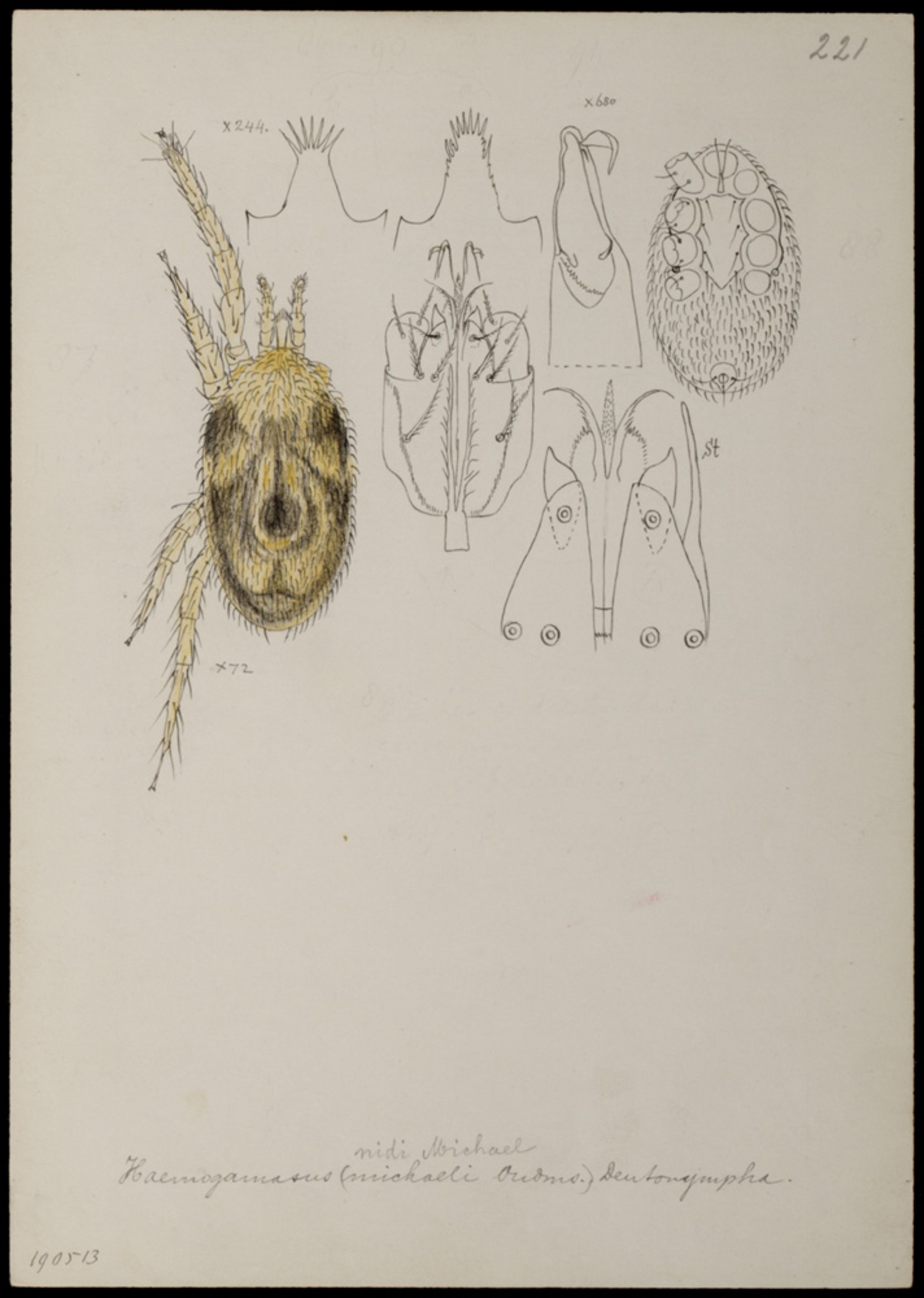 RMNH.ART.1067   Haemogamasus nidi (Michael)