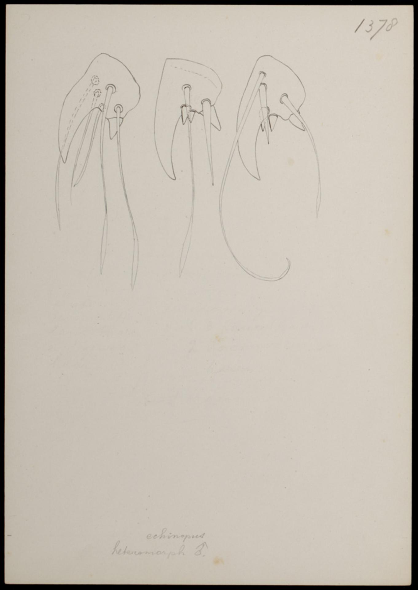 RMNH.ART.1695 | Rhizoglyphus echinopus (Fumouze & Robin)