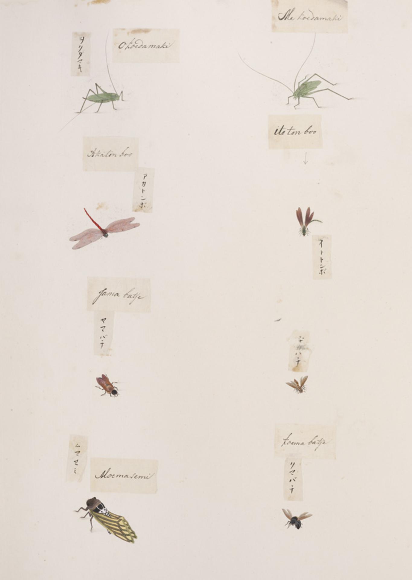 RMNH.ART.290 | Xylocopa appendiculata