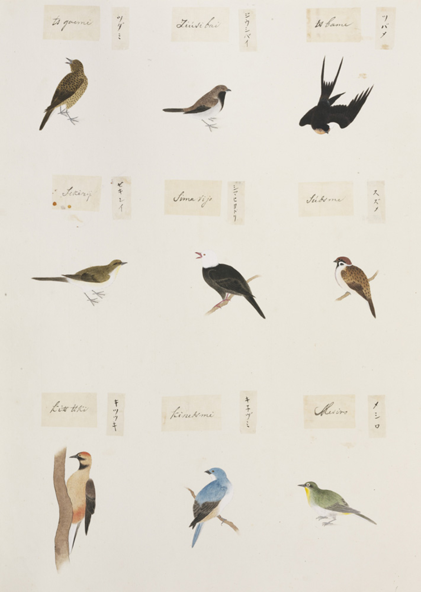 RMNH.ART.298 | Zosterops japonica
