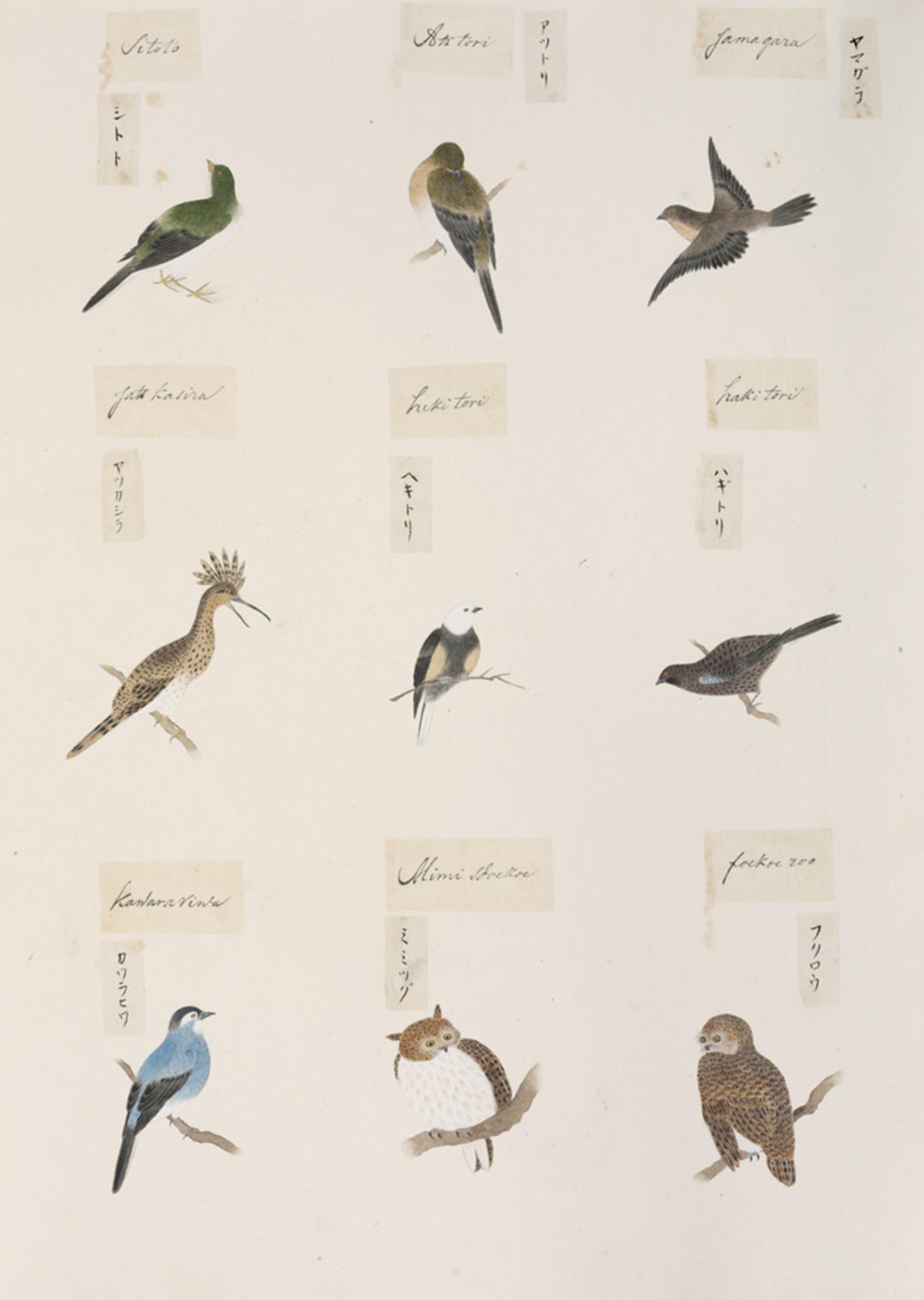 RMNH.ART.300 | Carduelis sinica