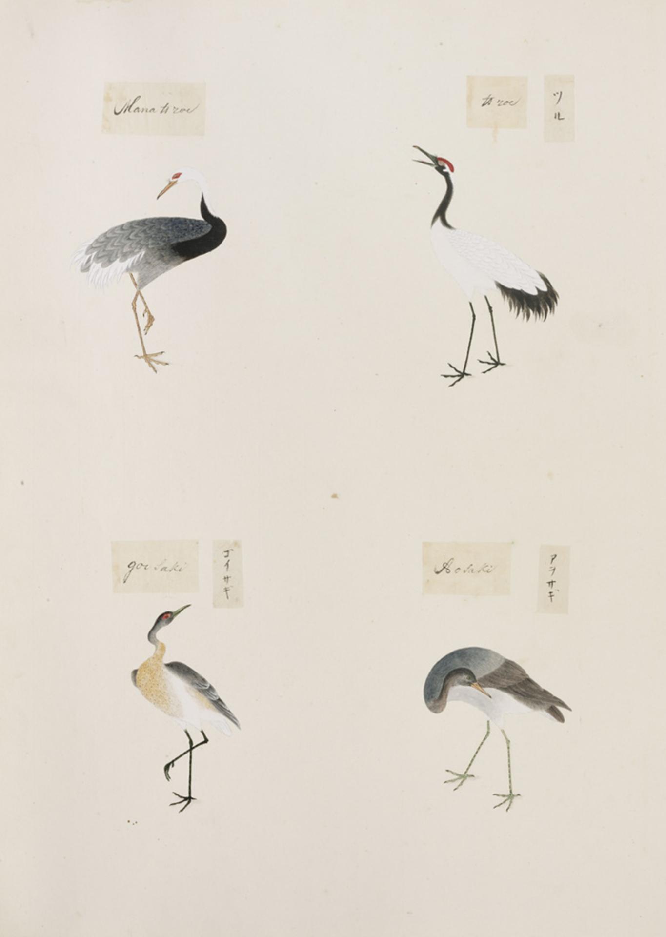 RMNH.ART.307 | Grus japonensis