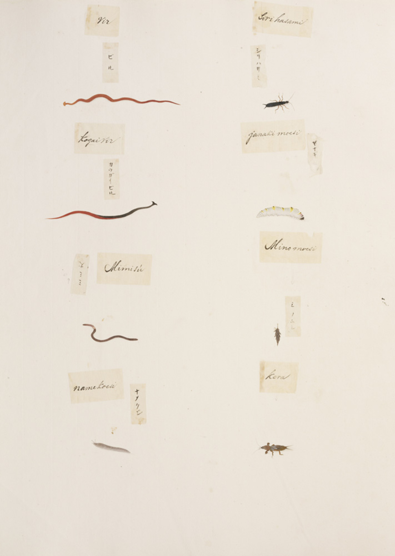RMNH.ART.333 | Gryllotalpidae indet.
