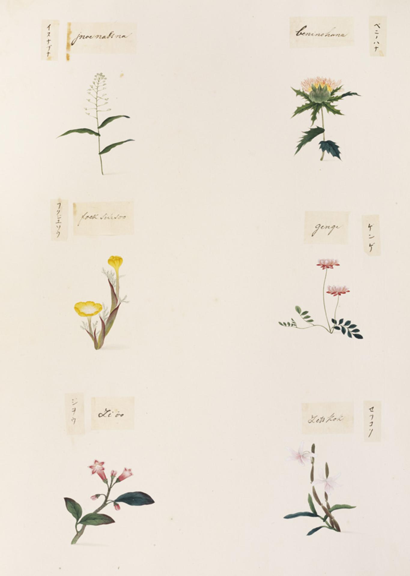 RMNH.ART.342 | Dendrobium moniliforme