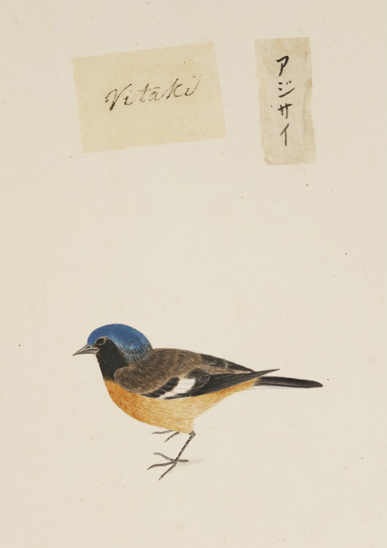 RMNH.ART.389   Phoenicurus auroreus