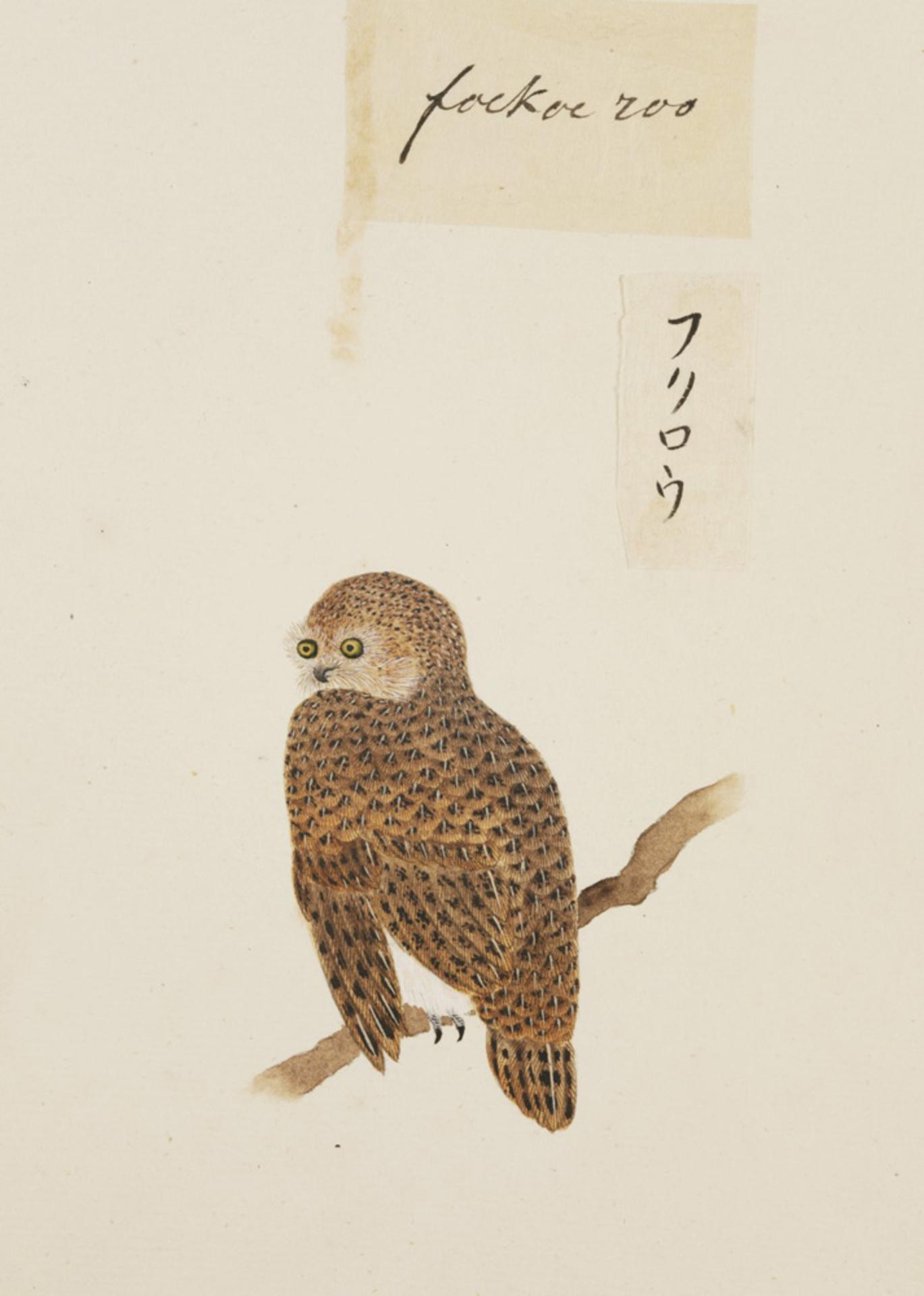 RMNH.ART.401 | Strix vralensis