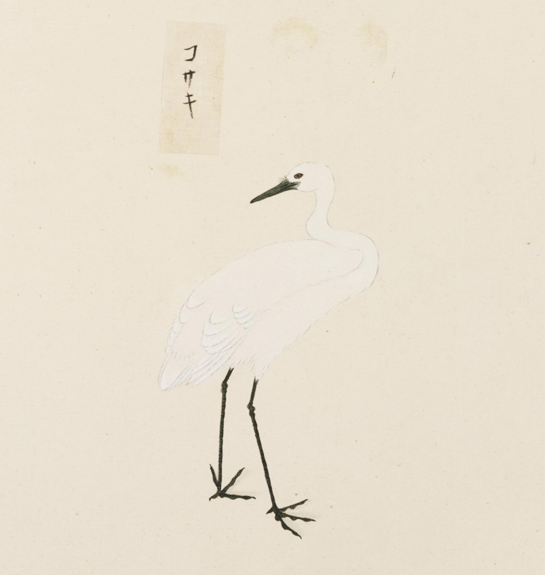 RMNH.ART.447 | Egretta garzetta