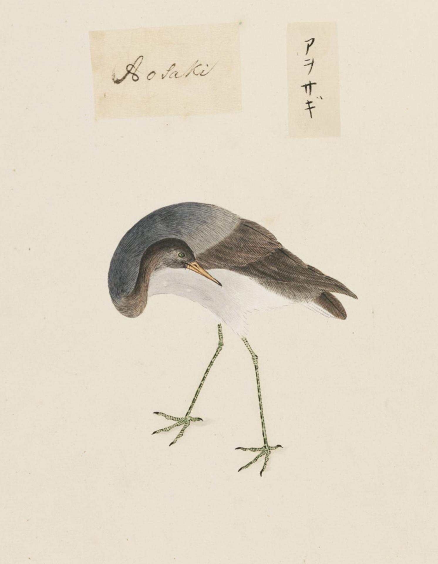 RMNH.ART.456 | Ardea cinerea