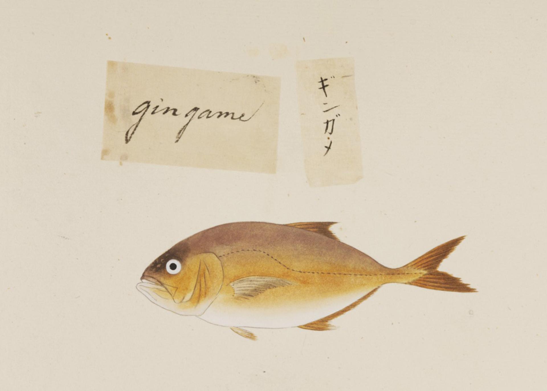 RMNH.ART.518 | Calanx sp
